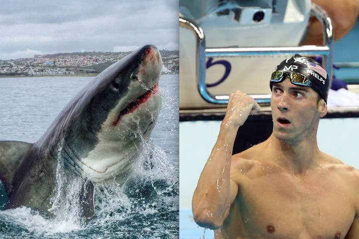 Michael Phelps will be racing a shark in this year's Shark Week on Discovery. Keystone Press